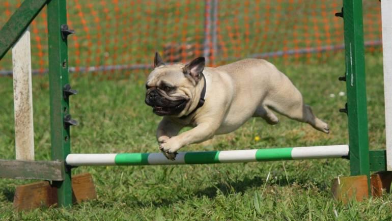 Basics of Dog Training