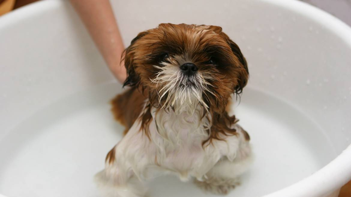 5 Tips to Bath Your Dogs
