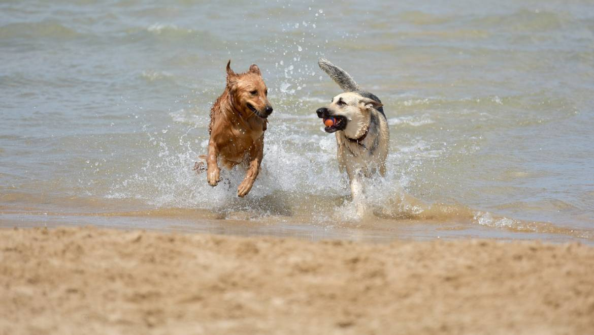 Best dog beaches in Los Angeles, CA