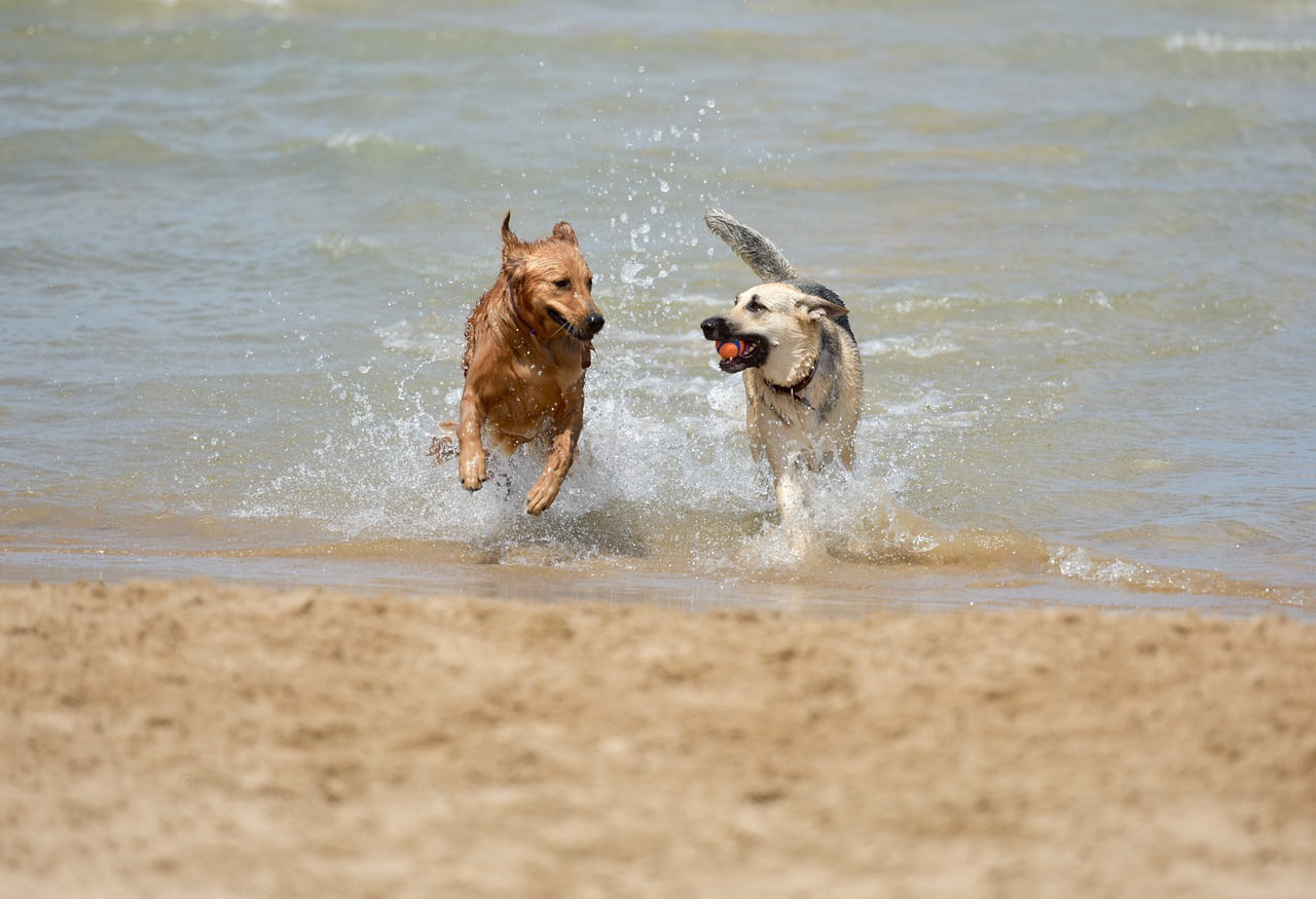 Best Dog Beaches In Los Angeles Ca