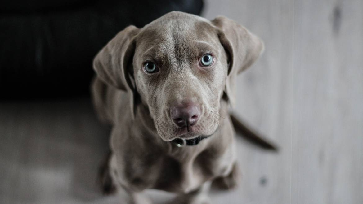 10 Things You Didn't Know About Your Puppy
