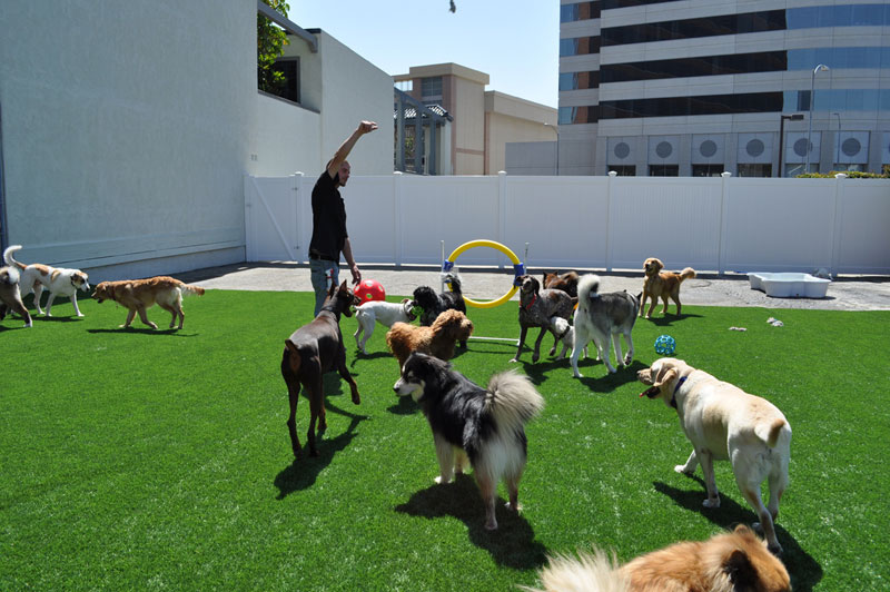 10 Benefits why you should send your doggie to dog daycare