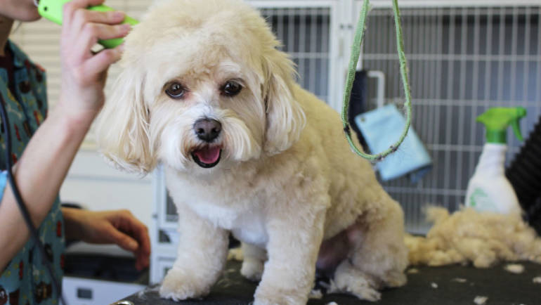 The Best Way To Prepare Your Dog For Grooming