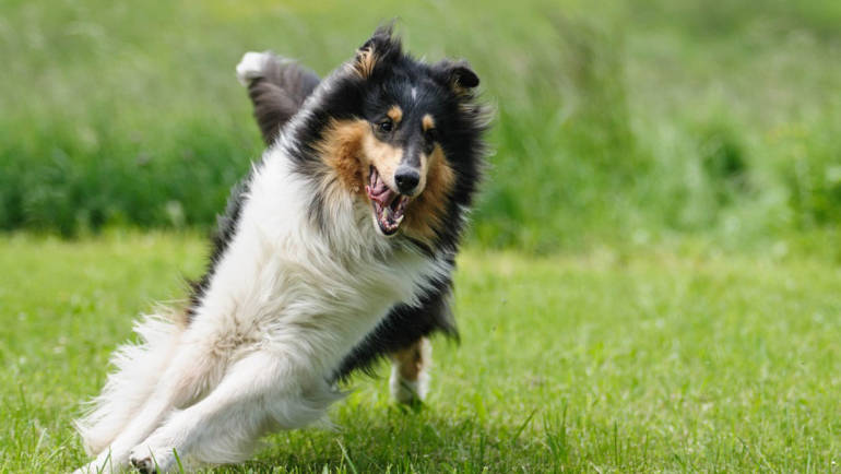 Does Your Dog Get Enough Exercise Daily?