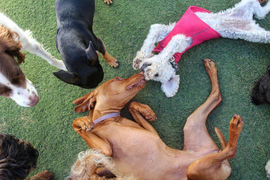 Dog Daycare Benefits for 2020